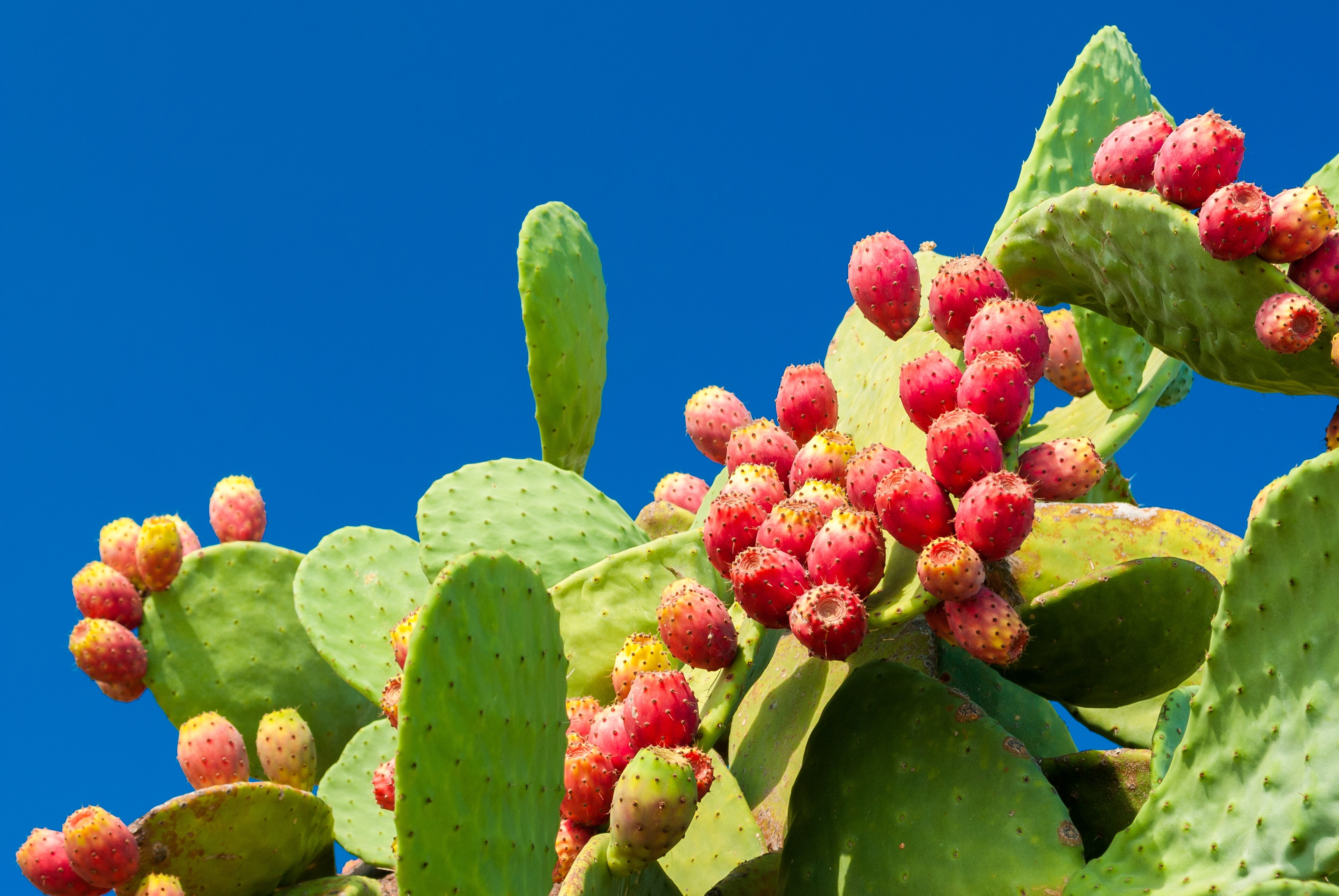 Cacto: planta tem sido fonte para criação de novo material (Foto: Thinkstock)