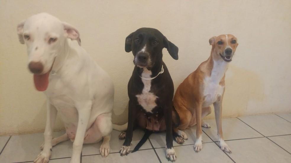 Vira-lata: conheça as vantagens de ter um cão sem raça definida ...