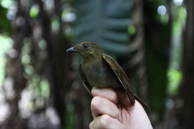 Após a identificação, as aves são soltas na natureza (Foto: Nane Fagundes/Divulgação)