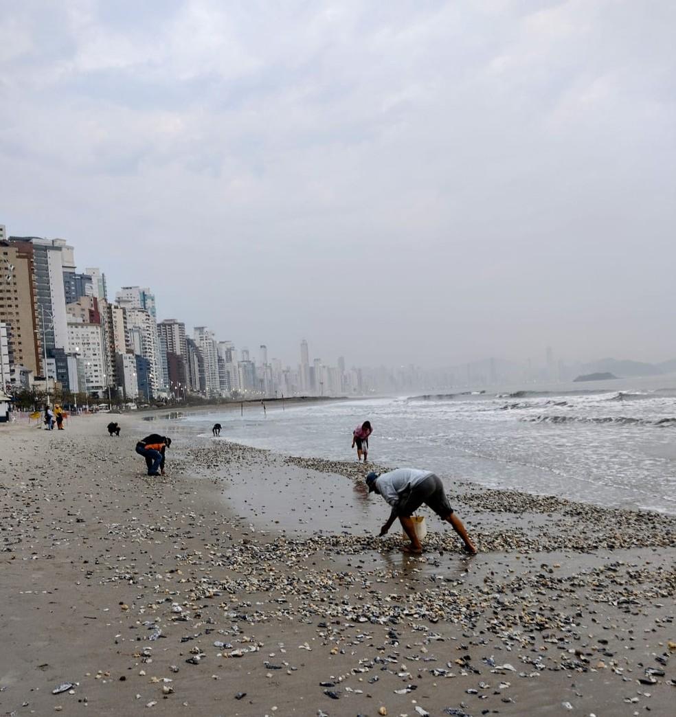 Pessoas recolhem conchas da praia em SC — Foto: Dariane Peres/Reprodução