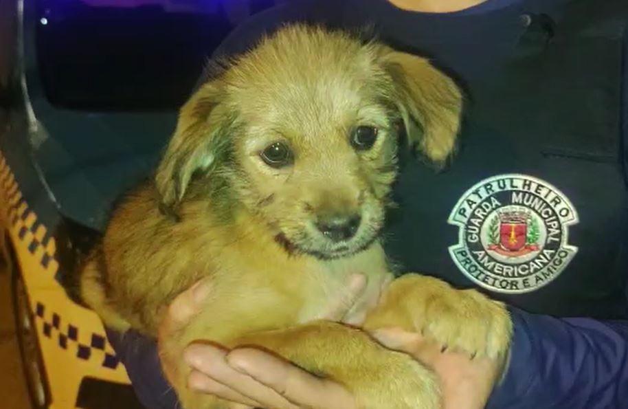 Mulher é levada à delegacia após abandonar 5 cachorros em terreno vazio de Americana