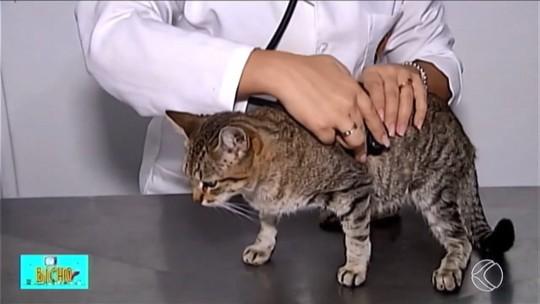 TV Bicho: especialistas de Divinópolis falam sobre os cuidados com gatos