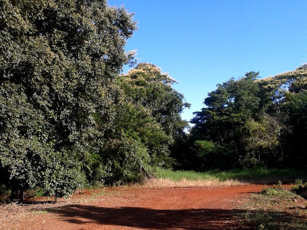 Em 2010, o antigo acesso à Estrada do Colono, em Serranópolis do Iguaçu, já estava praticamente tomado pela vegetação, depois de cerca de novo anos fechada — Foto: Fabiula Wurmeister/G1