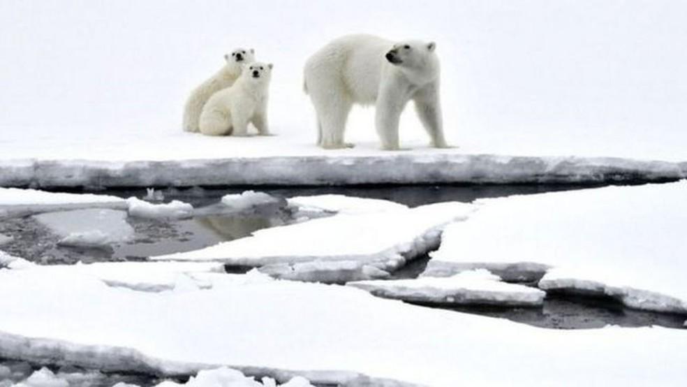 Mudança climática tem provocado derretimento acelerado de gelo nos pólos — Foto: Getty Images via BBC