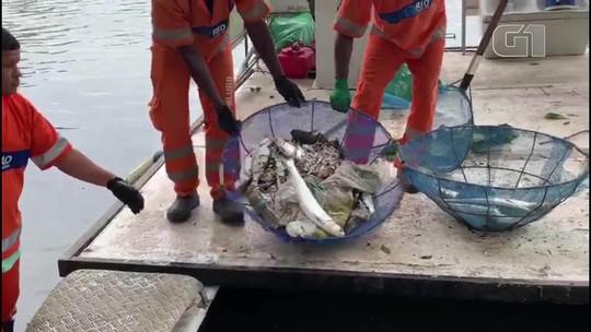 Peixes mortos voltam a aparecer na Lagoa Rodrigo de Freitas