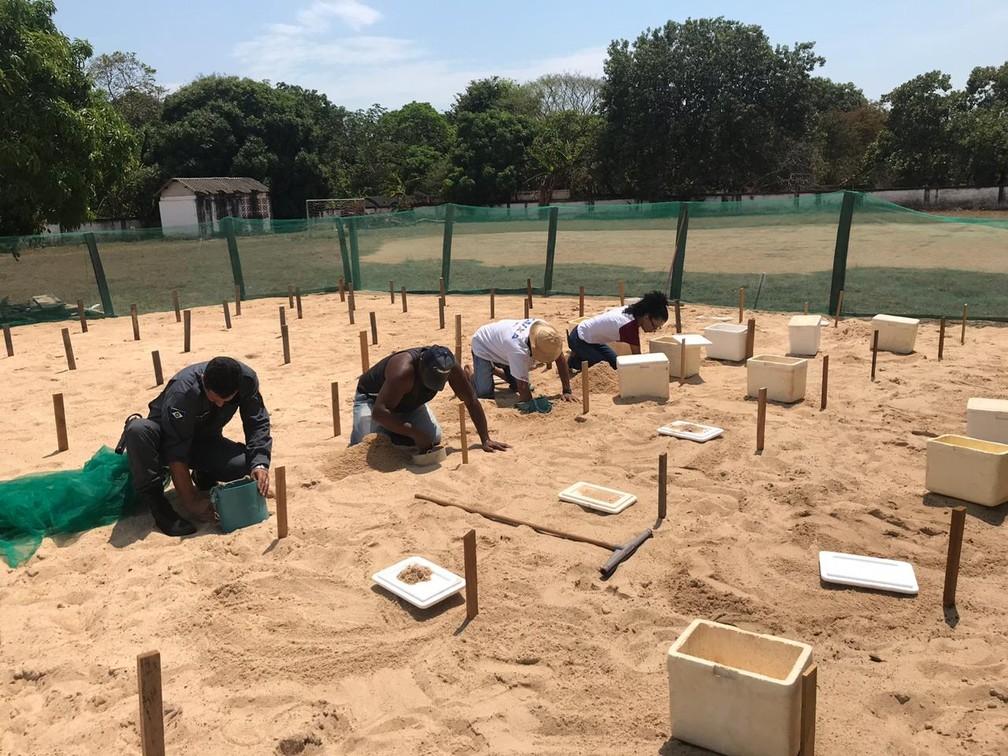 'Berçários' para tartarugas foram criados em escolas e até quartéis na região do Araguaia — Foto: Projeto Amigos da natureza