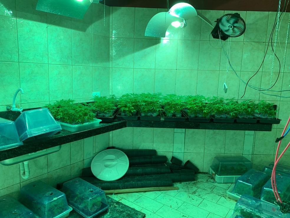 Barracão da 'supermaconha' em Salto (SP) abrigava todas as etapas da produção da droga — Foto: Deinter-2/Reprodução