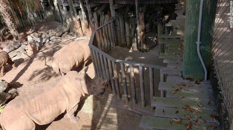 O zoológico oferecia aos visitantes a experiência de tocar os animais, mas está revendo os procedimentos após o acidente com a menina de 2 anos (Foto: Reprodução/Brevard Zoo)