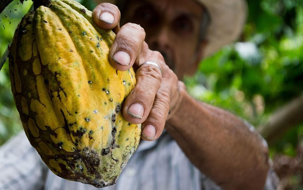 As mudanças climáticas devem ter grande impacto sobre o futuro do chocolate (Foto: eliasfalla/Creative Commons)