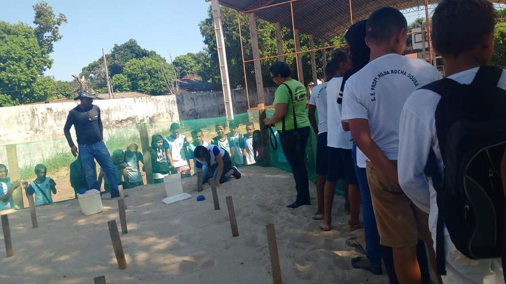 O projeto 'Amigos da natureza' faz o repovoamento da tartaruga-da-amazônia por meio de berçários em locais seguros e monitorados, até em escolas e quartéis militares — Foto: Projeto Amigos da natureza