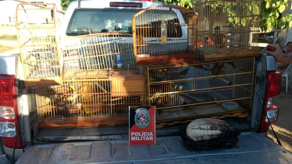 Homem não tinha licença ambiental para criar aves silvestres, em Cabedelo, PB (Foto: Major Cristóvão Lucas/BPAmb)