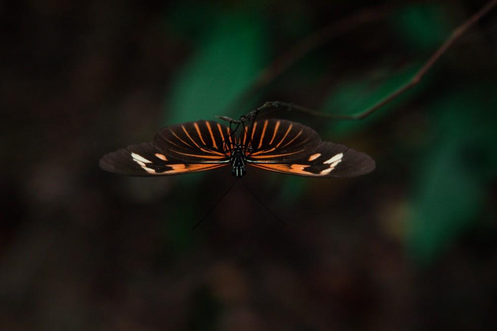 Borboleta é vista em área próxima à Floresta Nacional do Tapajós — Foto: Marcelo Brandt/G1