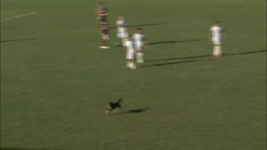 Cachorro invade campo e dribla jogador durante jogo da Série D; veja o vídeo
