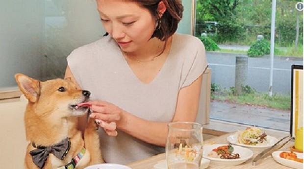 Nesse restaurante de Tóquio, o cachorro senta na mesa com o cliente (Foto: Reprodução)