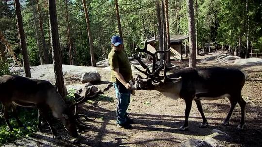 Há milhares de anos as renas convivem em harmonia com os humanos na Finlândia