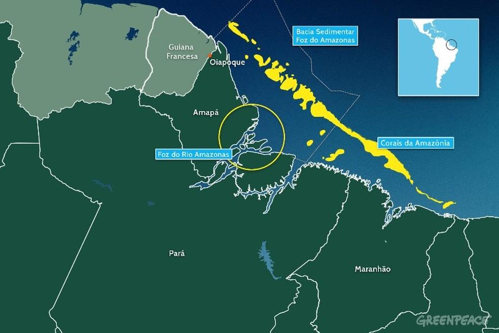 Corais existem na costa do Amapá — Foto: Divulgação/Greenpeace