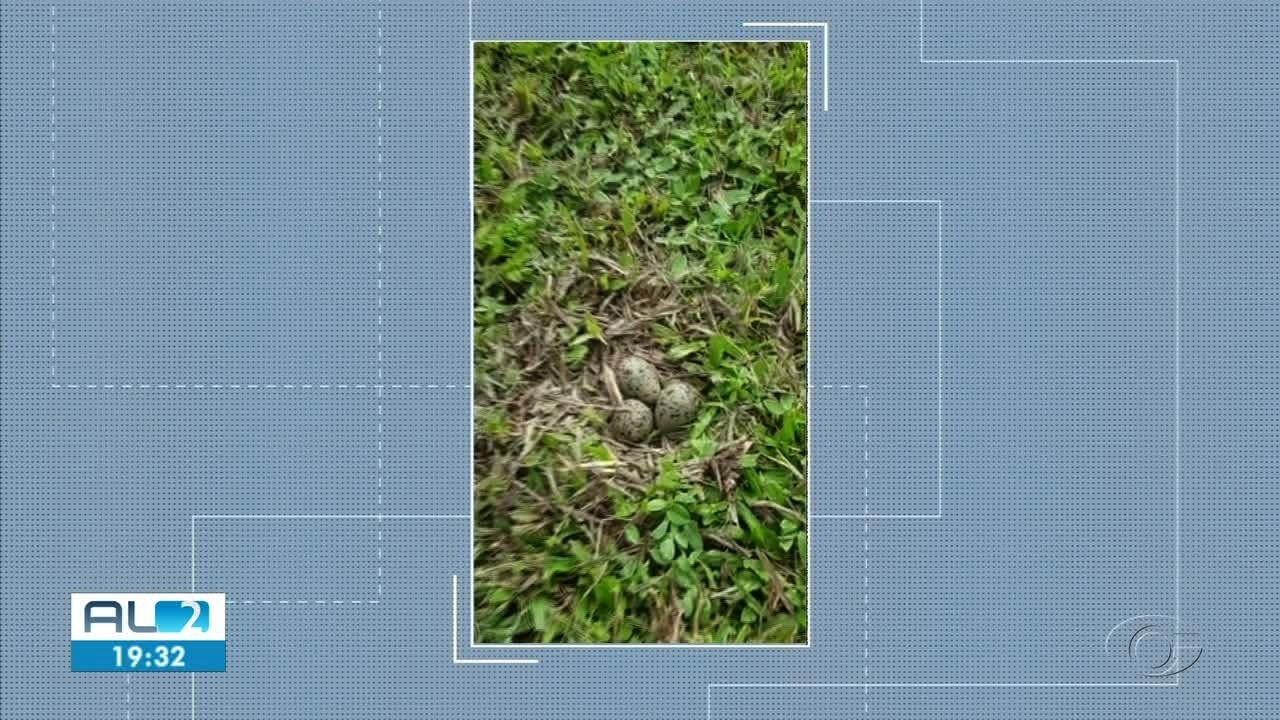 Casal de pássaros faz ninho no meio de um campo de futebol