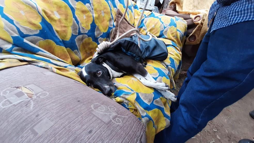 Cachorra foi resgatada com vida quase um mês depois de cair em precipício em Marília — Foto: Fabrício Lopes/TV TEM