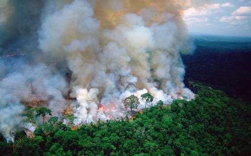 Personalidades de todo o mundo fazem campanha em defesa da Amazônia