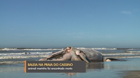 Baleia franca é encontrada morta na praia do Cassino