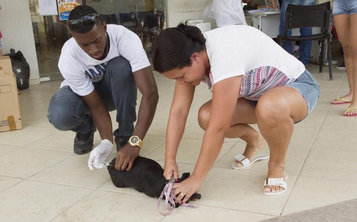 Rio das Ostras, RJ, recebe campanha de vacinação contra a raiva neste sábado