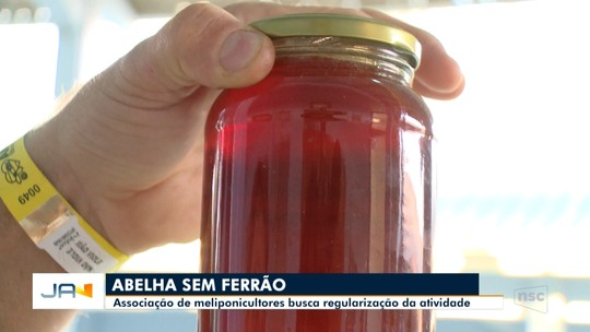 Associação de criadores de abelhas sem ferrão busca regularização da atividade