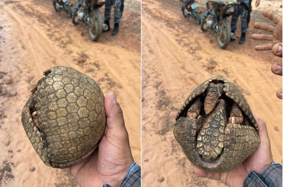 Polícia Militar resgata tatu-bola e apreende armadilhas no Piauí — Foto: Polícia Militar Ambiental