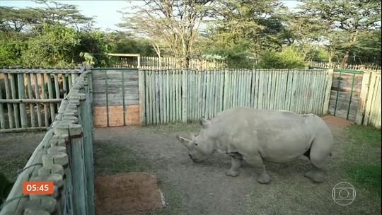Sete óvulos dos dois últimos exemplares de rinocerontes brancos do norte são fertilizados