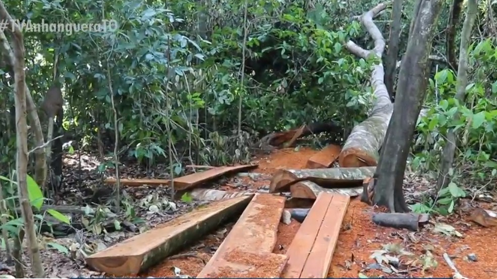 Illegal logging of Jatoba and Angelim timber reported in Araguaia National Park