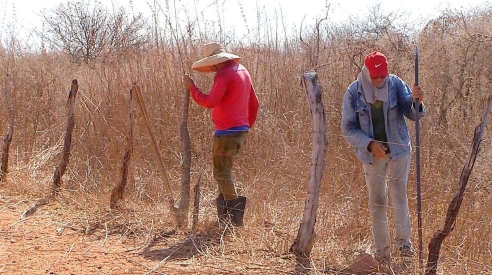 Agricultores consertam cerca no RN, na preparação para início do plantio. — Foto: Reprodução/Inter TV Costa Branca
