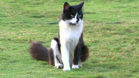 Seis dias depois do rato, gato aparece em São Januário durante jogo