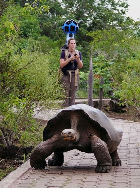 Imagem divulgada este mês pelo Google mostra funcionária do Google com equipamento para registrar imagens para o serviço Street View. Na imagem, é possível ver uma tartaruga-gigante (Foto: Google/AP)