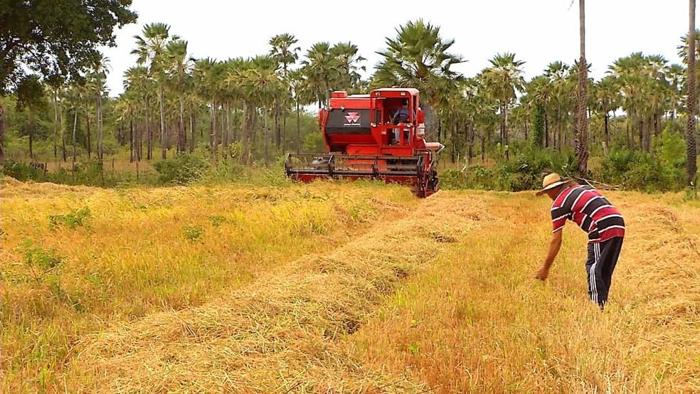 Falta de chuva dos últimos seis anos tira a confiança dos agricultores (Foto: Flávio Soares)
