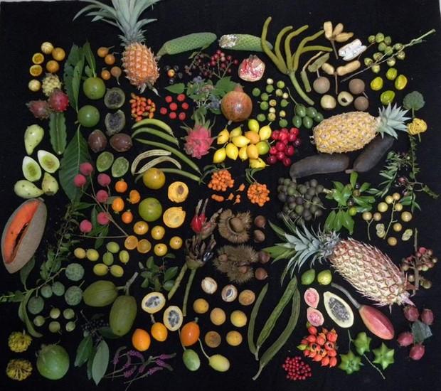 Colecionador reúne mais de 1300 espécies de frutas (Foto: Hélton Josué Teodoro Muniz/Divulgação)