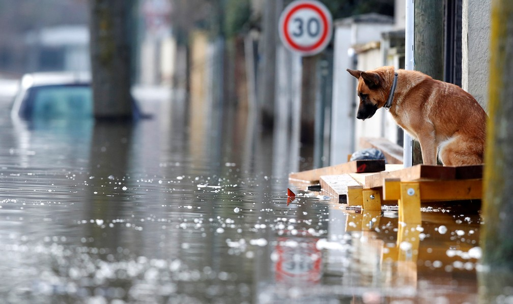 Cão observa rua alagada em Villeneuve-Saint-Georges, na região parisiense, nesta sexta (26). (Foto: Christian Hartmann/Reuters)