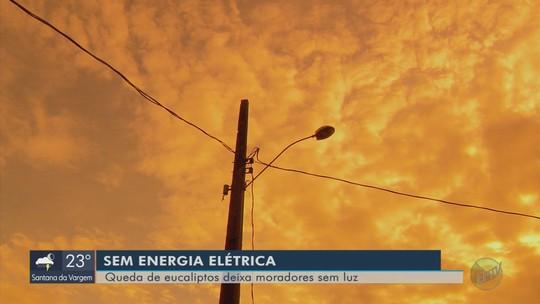Quedas de eucaliptos deixam pelo menos 900 mil pessoas sem energia no Sul de Minas