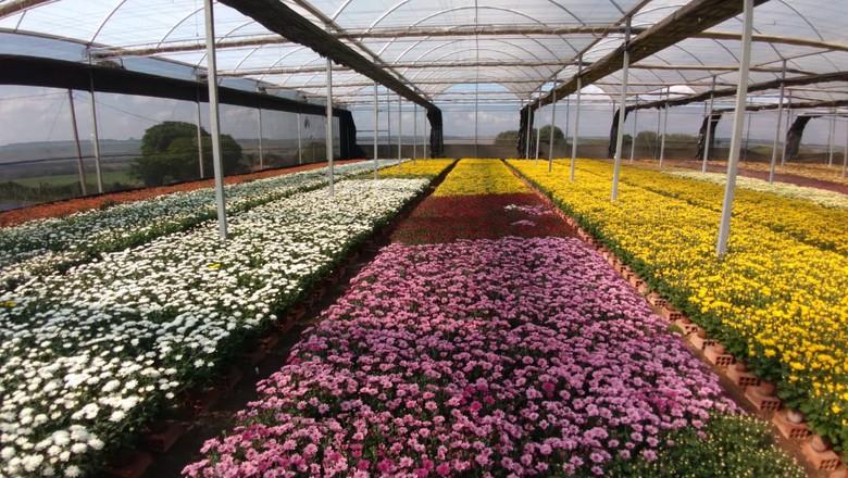 Produção de flores da Maggy Flores, de Holambra (Foto: Divulgação)