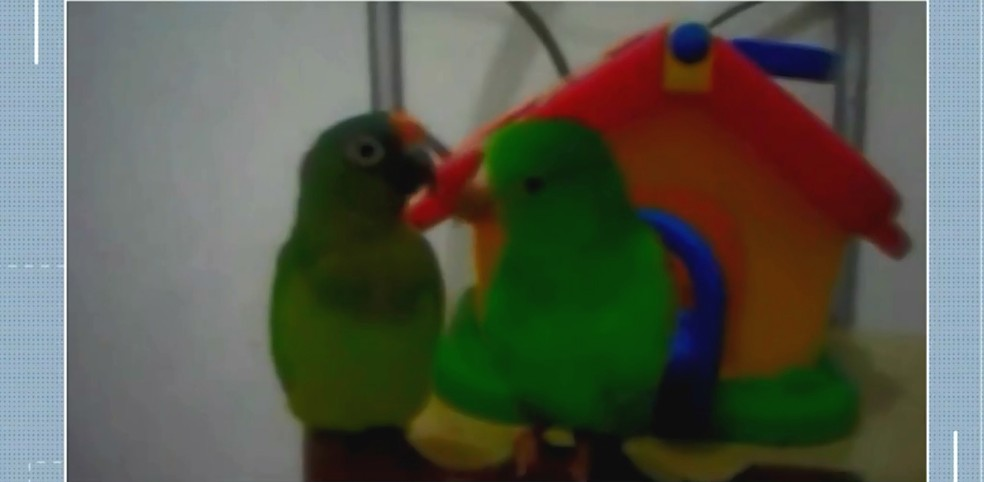 Tetê e Tequinho se alimentavam juntos — Foto: Reprodução/TV Bahia