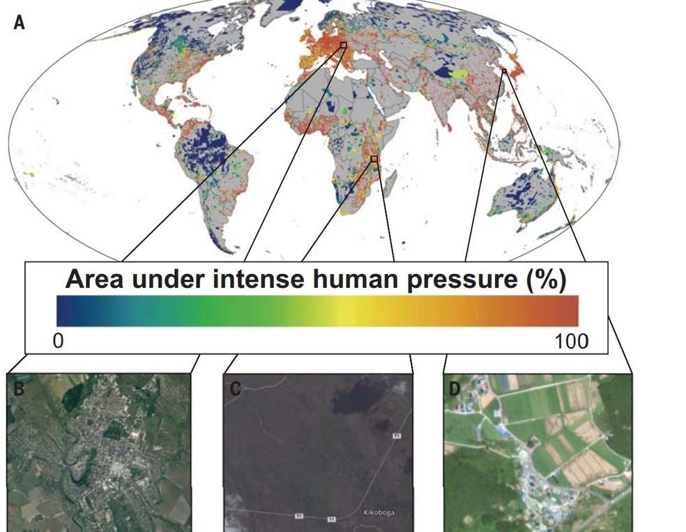 Mapa em estudo publicado na 'Science' mostra áreas sobre intensa atividade humana. Quanto mais alaranjada a cor, mais intensa a atividade é. No quadro B, está o Parque Nacional Podolskie Tovtry, na Ucrânia. Na C, estradas na Tanzânia; Na D, áreas de agricultura e prédios na Coréia do Sul   (Foto: Google Earth/Science)