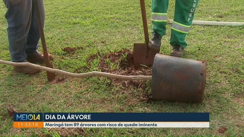 VÍDEOS: tudo sobre as regiões norte e noroeste do Paraná