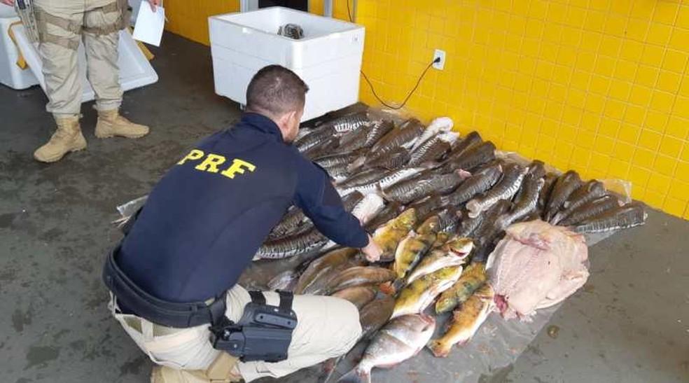 PRF apreende mais de 289 kg de pescado em Pontes e Lacerda — Foto: Polícia Rodoviária Federal de Mato Grosso/Assessoria