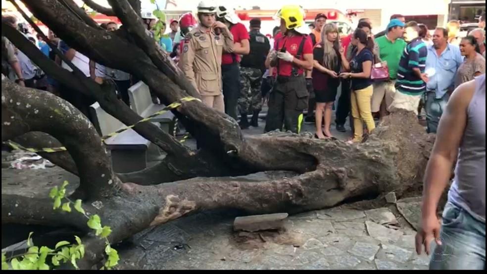 Árvore caiu sobre idoso em praça no Mercado Público de Mangabeira, em João Pessoa (Foto: Reprodução/TV Cabo Branco)