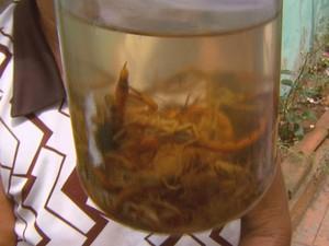 Escorpião em São Carlos (Fot Reprodução/EPTV)