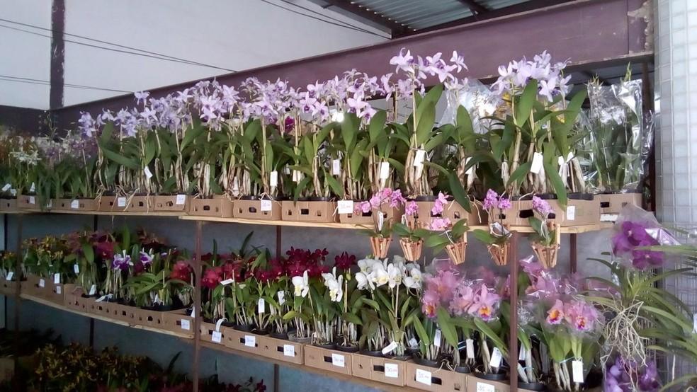 Mais de 300 espécies de orquídeas estão em exposição (Foto: Fábio Borborema/Arquivo pessoal)