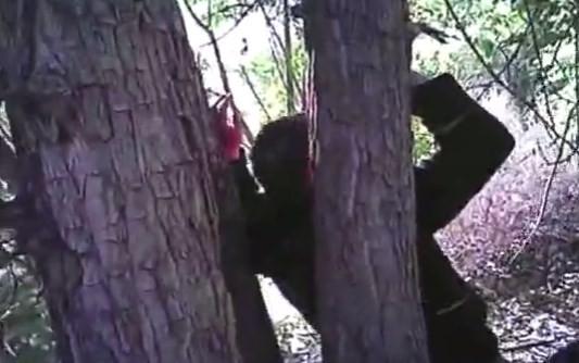 Homem é achado pregado pelas mãos em duas árvores