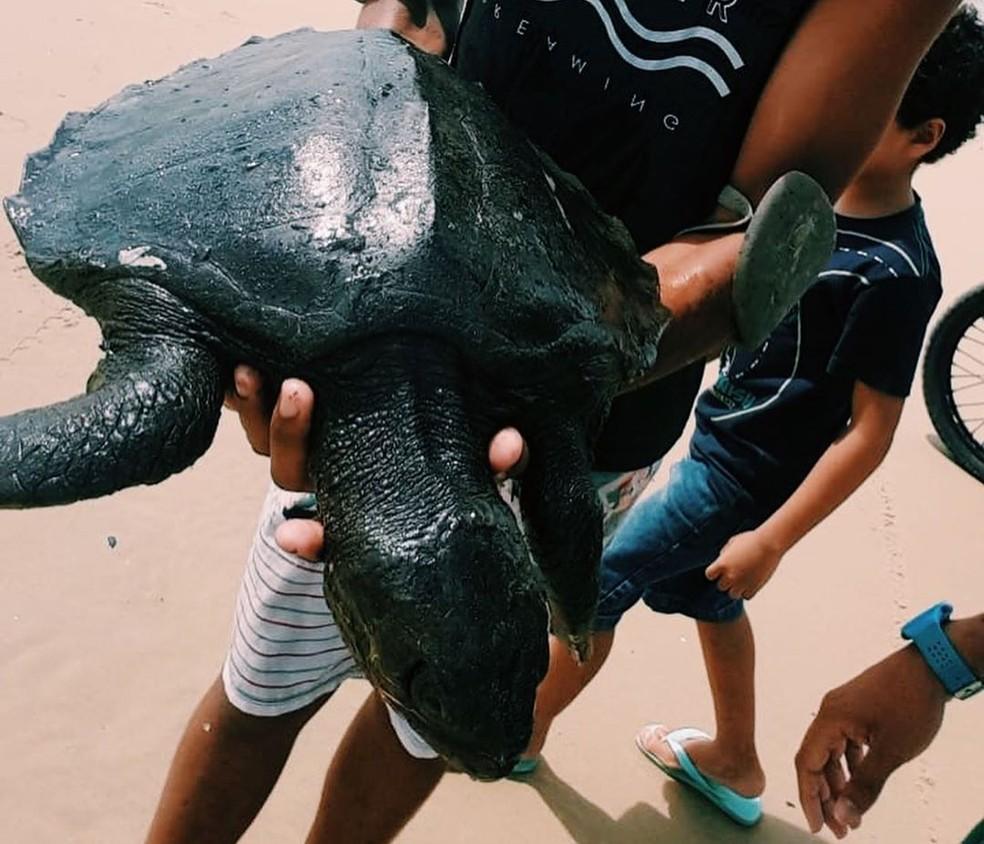 Tartarugas cobertas de óleos foram encontradas em praias do litoral nordestino — Foto: Instituto Verdeluz/Divulgação