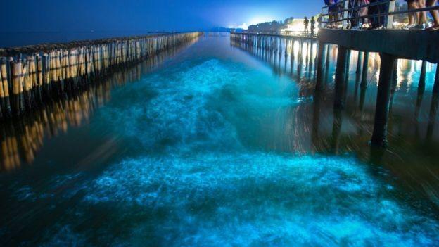Criaturas marinhas bioluminescentes brilham, criando efeitos visuais incríveis, particularmente quando perturbadas (Foto: GETTY IMAGES/BBC News Brasil)