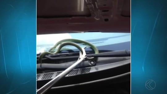 Cobra aparece em capô de carro e assusta motorista em São João del Rei