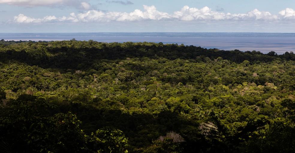 Parte da Floresta Nacional do Tapajós, com o rio Tapajós ao fundo, no Pará — Foto: Marcelo Brandt/G1