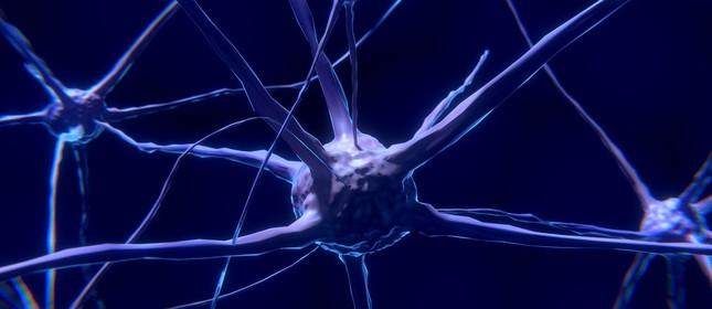 Os neurônios são células nervosas do cérebro responsáveis transmissão de informações